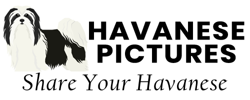 Havanese Pictures logo