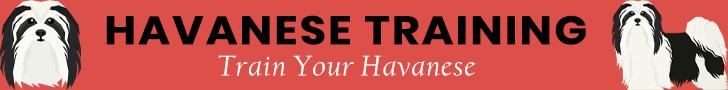Havanese Training Banner Ad